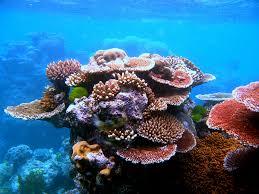 coral-calcium-powder